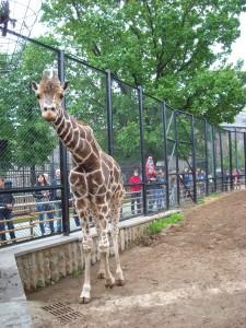 Зоопарк 017
